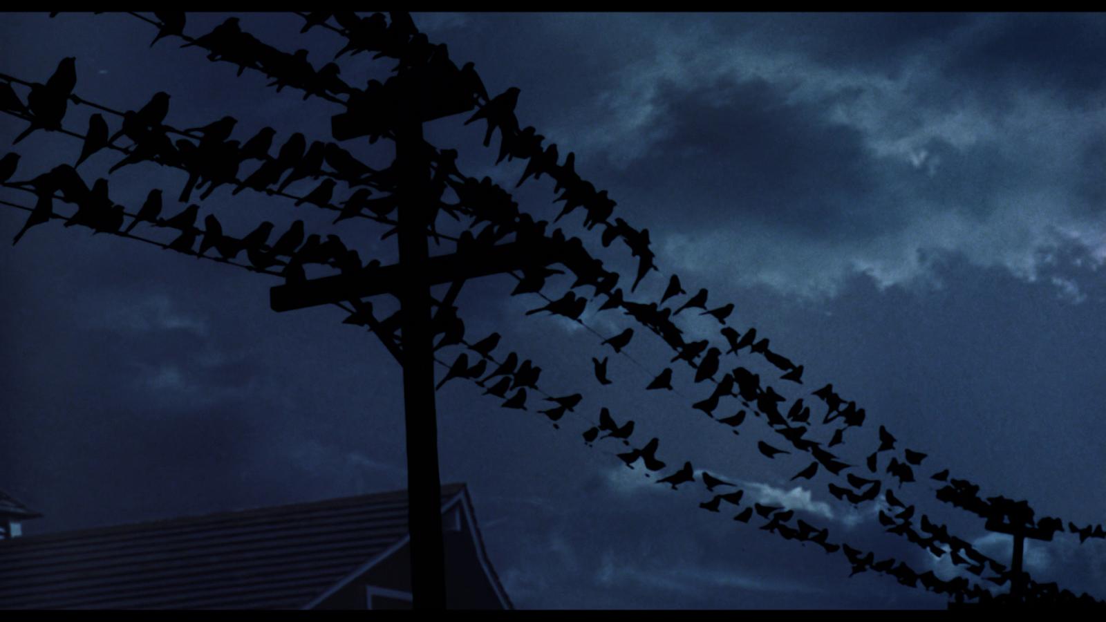 The Birds BR (night sky)