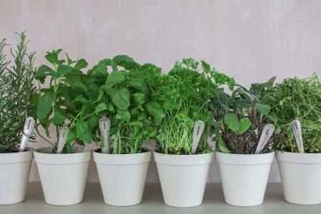 11 warzyw i owoców, które można uprawić w domu