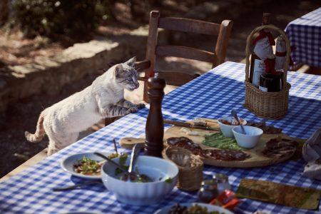 Bieżnik na stół czy obrus – na co się zdecydować?